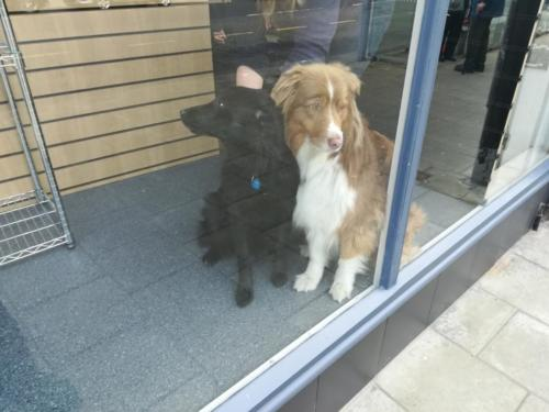 How much is that dog in the window?